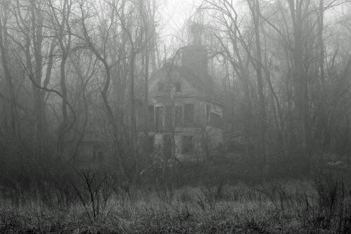 Fog House 2